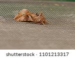 silver y moth or possibly a... | Shutterstock . vector #1101213317