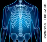realistic x ray shots.images... | Shutterstock .eps vector #1101265781