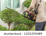 hedge trimmer in action.cutting ... | Shutterstock . vector #1101293489
