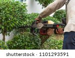 hedge trimmer in action.cutting ... | Shutterstock . vector #1101293591