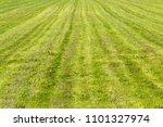 cut grass  green field  summer... | Shutterstock . vector #1101327974