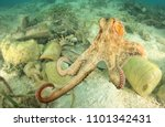 octopus and plastic pollution... | Shutterstock . vector #1101342431