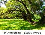 oak road in plantation | Shutterstock . vector #1101349991