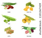 beans species set  healthy and...   Shutterstock .eps vector #1101367439