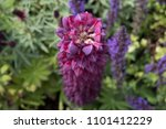close up of stunning  perfect ... | Shutterstock . vector #1101412229