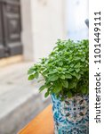 Small photo of Fresh basil plant in a colorful pot on a wooden window sill, blur building facade background