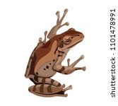 Brown Frog Or Toad Vector...