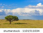 meadow with tree in la pampa ...