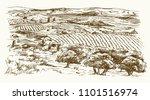 italian landscape with vineyard ... | Shutterstock .eps vector #1101516974