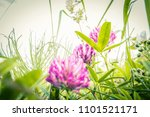 beautiful wildflowers in the... | Shutterstock . vector #1101521171