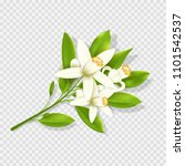 realistic orange flowers... | Shutterstock .eps vector #1101542537