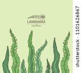 laminaria  laminaria seaweed ... | Shutterstock .eps vector #1101626867