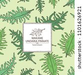 background with wakame  undaria ... | Shutterstock .eps vector #1101626921