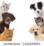 Stock photo different pets looking from the side 1101649691