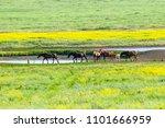 a herd of wild horses shown on... | Shutterstock . vector #1101666959