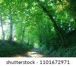 Beautiful Natural Tree Tunnel...