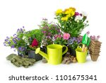 seedling of garden plants and... | Shutterstock . vector #1101675341