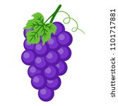 purple grapes illustration  ... | Shutterstock .eps vector #1101717881