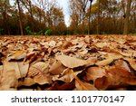 Leaves Dry On The Floor Of The...