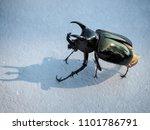 dynastinae black beetle | Shutterstock . vector #1101786791
