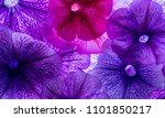 background from flower petals   ... | Shutterstock . vector #1101850217