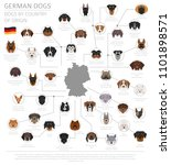 dogs by country of origin.... | Shutterstock .eps vector #1101898571