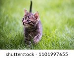 cat portrait in color | Shutterstock . vector #1101997655