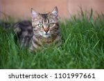cat portrait in color | Shutterstock . vector #1101997661