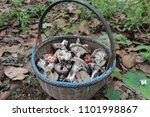 a variety of wild mushrooms... | Shutterstock . vector #1101998867