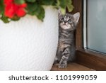 adorable cat portrait | Shutterstock . vector #1101999059