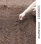 seeding | Shutterstock . vector #11020021