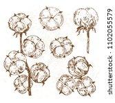 hand drawn sketch illustration... | Shutterstock .eps vector #1102055579