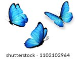Large Butterfly Morpho With...