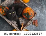 Stock photo green eyes black cat and orange pumpkins in wicker basket on gray cement background with autumn 1102123517