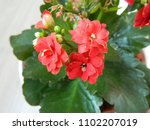 home decorative potted plant  ...   Shutterstock . vector #1102207019