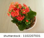 home decorative potted plant  ...   Shutterstock . vector #1102207031