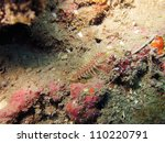 Small photo of Bristle worm (Polychaeta)