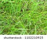 grass. clover. vegetable...   Shutterstock . vector #1102210925