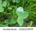 grass. clover. vegetable...   Shutterstock . vector #1102210949