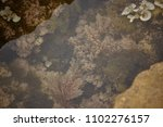 aquatic vegetation attached to... | Shutterstock . vector #1102276157