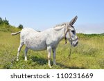 Donkey in landscape - stock photo