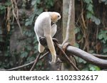a gibbon in the tree | Shutterstock . vector #1102332617