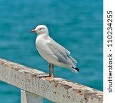 Sea Gull At The Beach In...