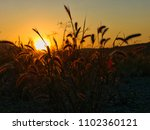 silhouettes of vegetation at sunset