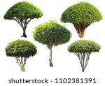 set of bush isolated ... | Shutterstock . vector #1102381391