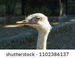 close up ostriches portrait.... | Shutterstock . vector #1102386137