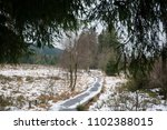 Pine Trees And Peat Bogs In Th...