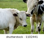 cow and calf | Shutterstock . vector #1102441