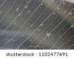 macro structure white delicate... | Shutterstock . vector #1102477691