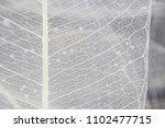 macro structure white delicate... | Shutterstock . vector #1102477715